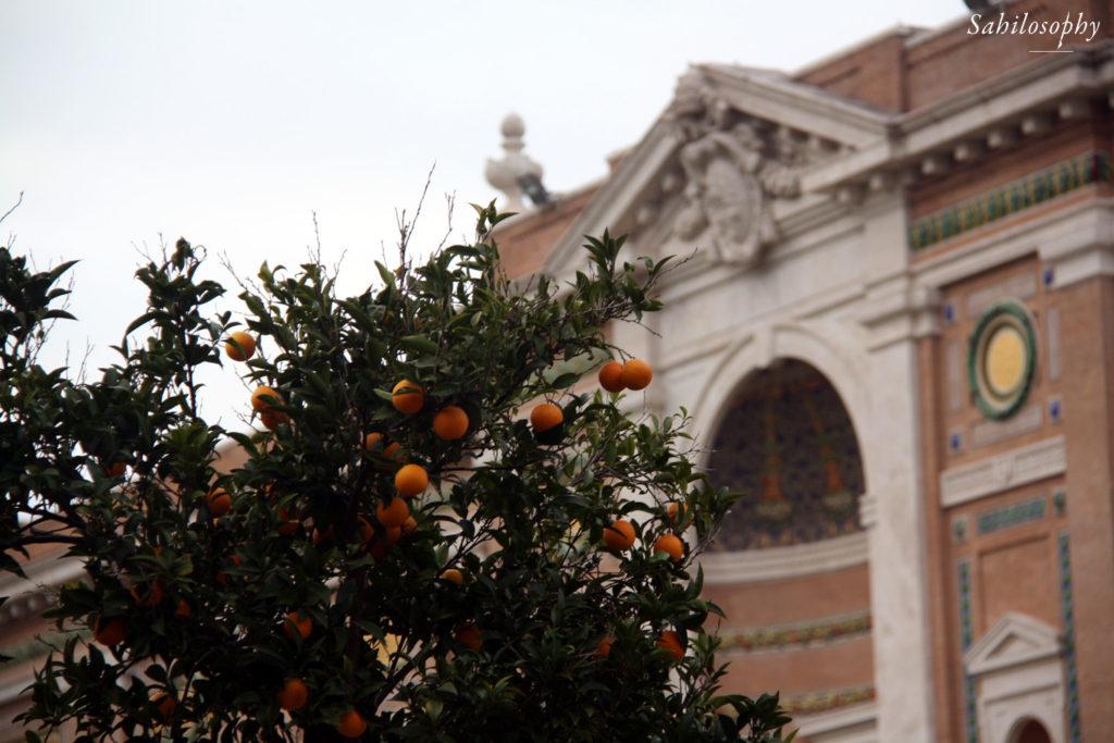 Oranges at Vatican City